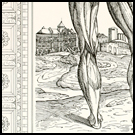 Vesalius at Galveston